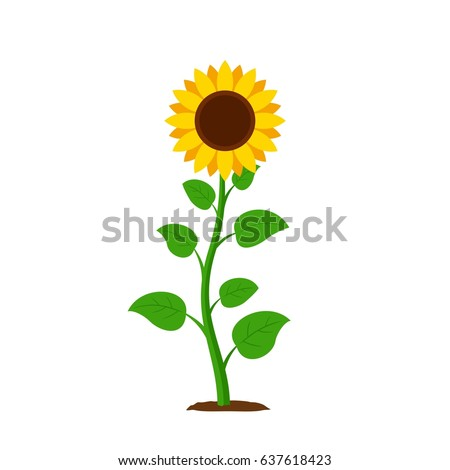 stock-vector-sunflower-with-green-leaves-in-flat-style-isolated-on-white-background-vector-illustration