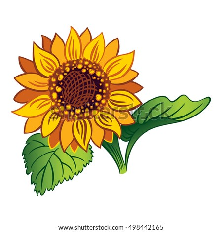 sunflower with two leaves and a