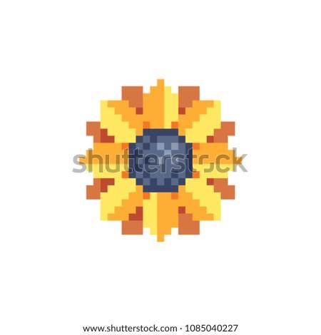 sunflower yellow flowerpixel