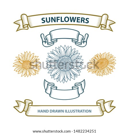 Sunflowers and ribbons hand drawing sketch vector illustrations set. Part of set.