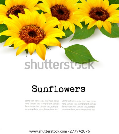 sunflowers background with