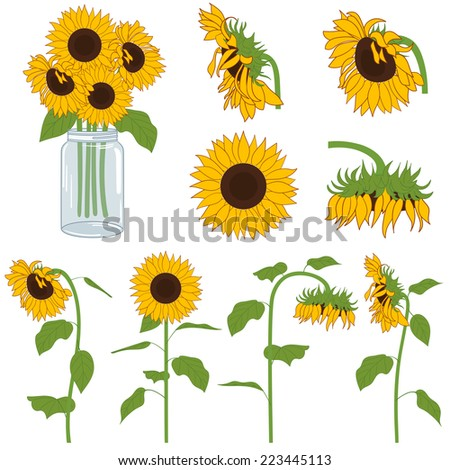 sunflowers set