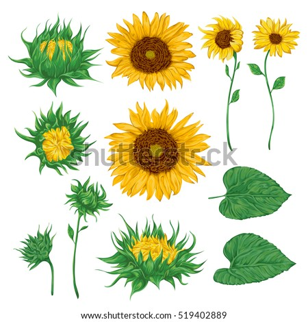 sunflowers set collection