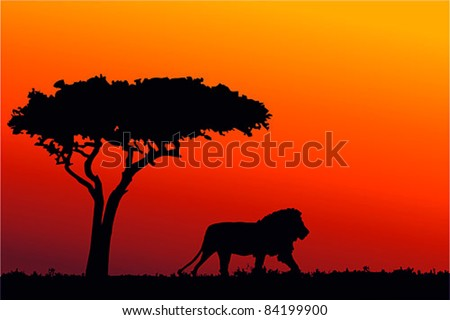 Sunrise in Africa, walking lion silhouette