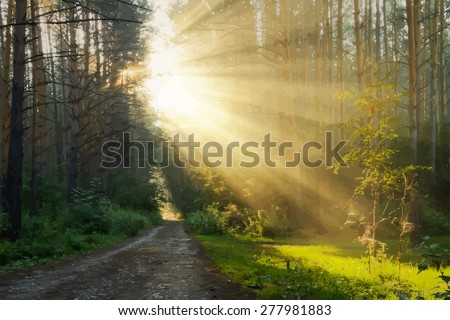 sunrise in the foggy forest