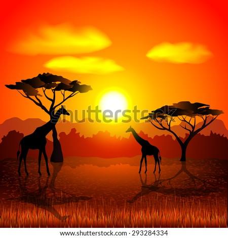 sunset in african savannah