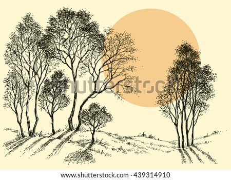 sunset in the forest trees