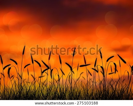 sunset in the reed on the nature