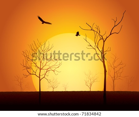 sunset scene  dried trees on