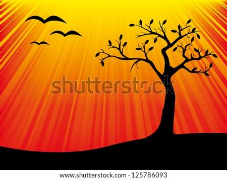 sunset tree background