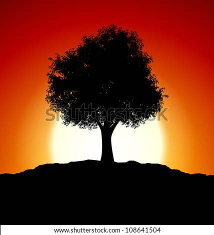 sunset with tree silhouette
