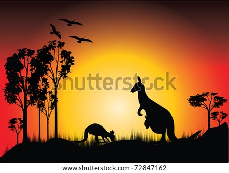 sunset with two kangaroos and joey in the bush