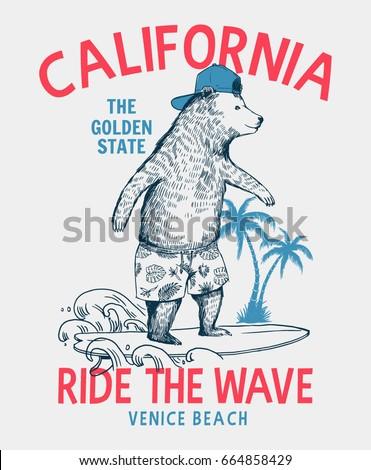 surfer bear vector illustration