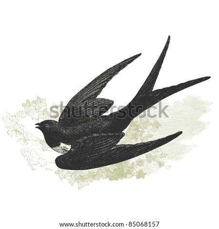 swallow   vintage engraved...