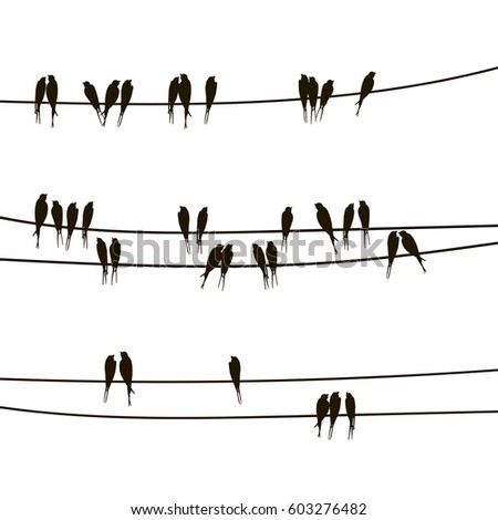 swallows on wires  vector hand
