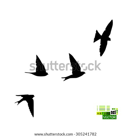 swallows silhouette vector