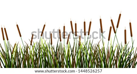 Swamp canes Water Reed Plant Cattails Green Leaf Grass in Swamp,Lake and River graphic vector Сток-фото ©