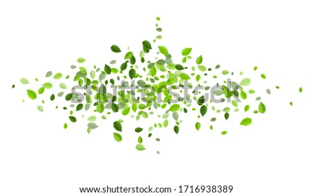 Swamp Foliage Tree Vector Illustration. Spring Leaf Banner. Mint Leaves Forest Background. Greens Flying Pattern.