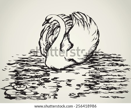 Stock Photo Swan are bird of the family Anatidae within the genus Cygnus. Vector monochrome freehand ink drawn background sketchy in art scribble antiquity style pen on paper with space for text