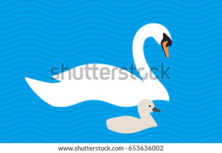 swan baby swimming in the lake