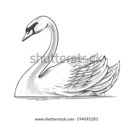 swan in engraving style vector illustration isolated