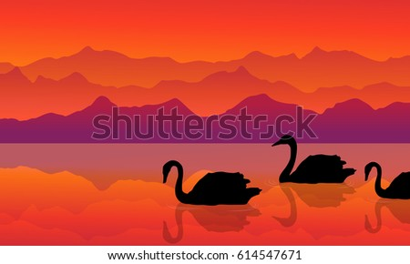swan on the lake of silhouette