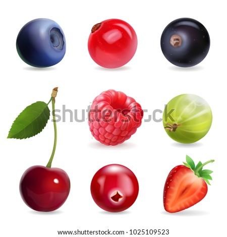 sweet berries  vector