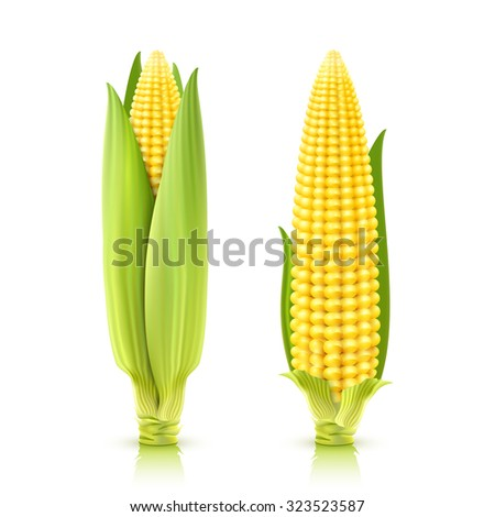 Sweet corn cobs realistic decorative icons set isolated vector illustration #323523587