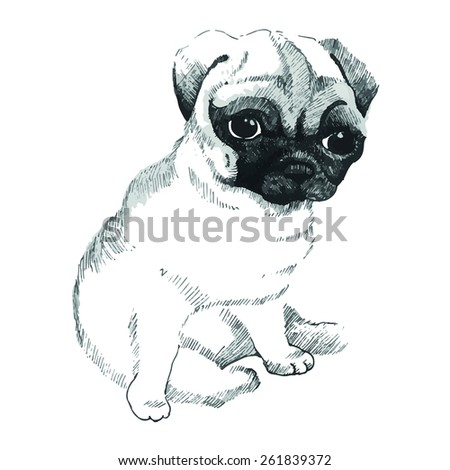 sweet little pug  small