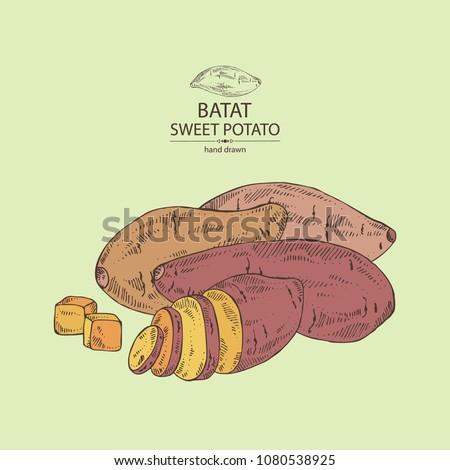 Sweet potato: root and sweet potato slice. Vector hand drawn illustration.