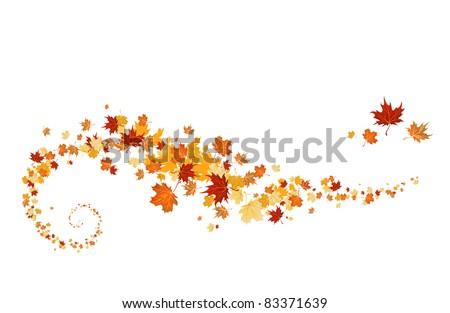 Swirl of maple leaves