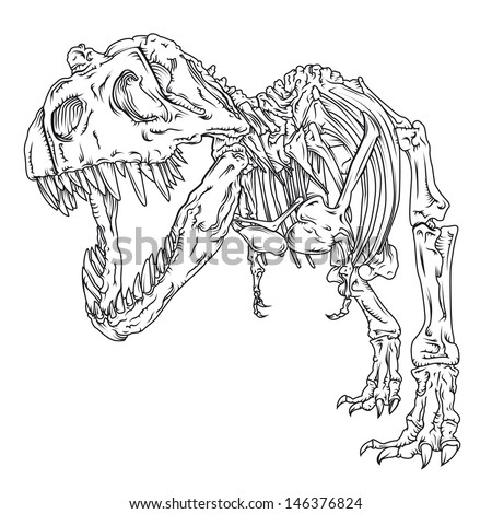 T-Rex Vector Line drawing/T-Rex Line Drawing/Detailed vector line drawing of a Tyrannosaurus skeleton, easy to edit and size, 1 color used (black) :) colour version also in my portfolio - stock vector