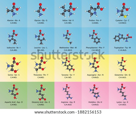 Table of 20 common amino acids - with chemical formula and ball and stick model molecular structure. Educational chart for chemistry, biology and medicine.