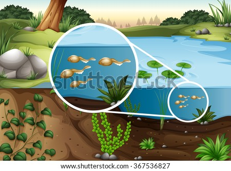 tadpoles swimming in a pond