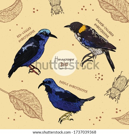 tanager birds collection  hand