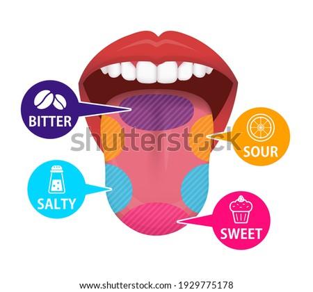 taste areas of human tongue