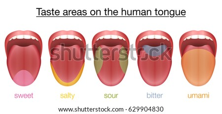 Shutterstock Taste areas of the human tongue - sweet, salty, sour, bitter and umami - with colored regions of the appropriate taste buds. Isolated vector illustration on white background.
