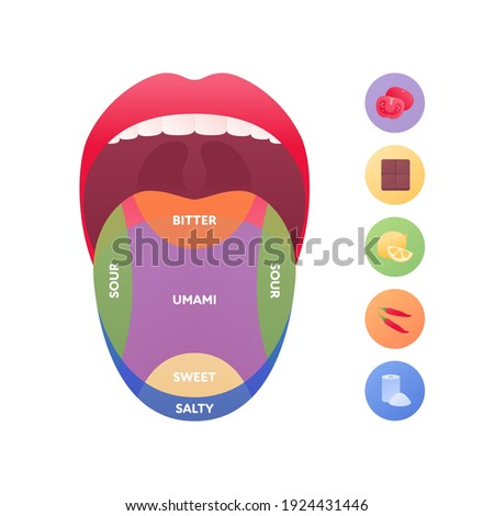 Taste scheme concept. Vector flat modern color illustration. Tongue with lips. Mouth tasty sense symbol. Umami, sweet, sour, bitter, salty symbol icons. Tongue zone infographic. Foto stock ©
