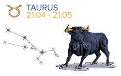 Taurus horoscope sign on a white background. An angry bull. A black animal. The months of April and may. Constellation of a metal bull. Rage and confidence. Zodiac sign of the earth.