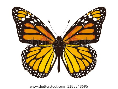 Tawny Orange Monarch Butterfly