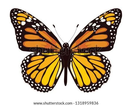 Tawny Orange Monarch Butterfly Stock photo ©