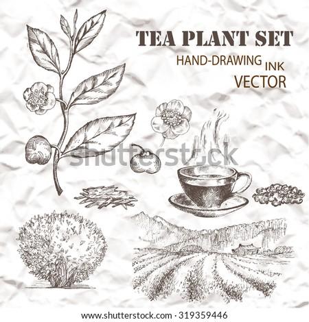 tea plant set hand drawn