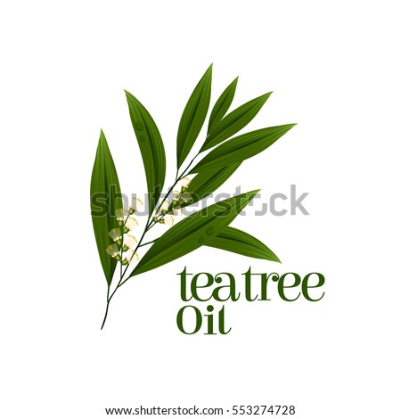 tea tree leaf vector