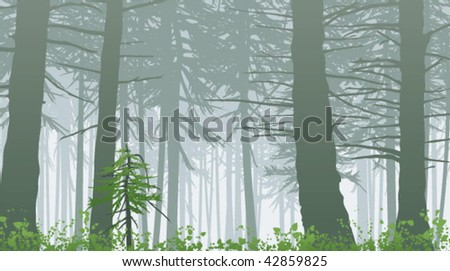 temperate rain forest in mist