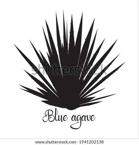 Tequila agave black silhouette. Vector illustration isolated on white background. Blue agave succulent plant.