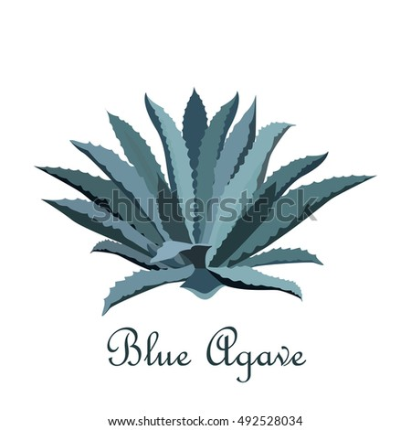 tequila blue agave realistic