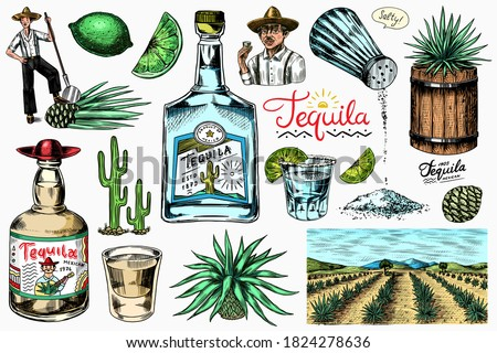 Tequila bottle, shot with lime, blue agave Plant, barrel and root ingredient, farmer and harvest. Engraved hand drawn vintage sketch. Woodcut style. Vector illustration for menu or poster. Foto stock ©