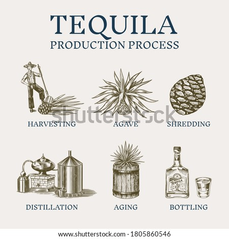Tequila production process. Glass bottle, shot with lime, Distilled alcohol, blue agave Plant, barrel and farmer and harvest. Retro poster or banner. Engraved hand drawn vintage sketch.  Foto stock ©