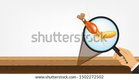 termite in magnifying glass and wooden isolated on gray background, magnifying glass with termite for banner copy space, termite zoom concept and damage house, infestation from termites colony