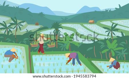 terraced asian rice fields in